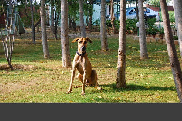 zoomcar.com - hotels that love pets too