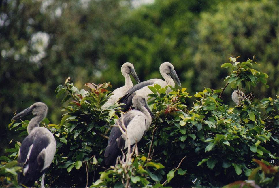 karnala-bird-santuary